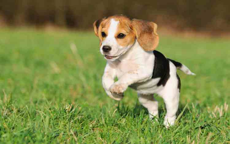 Top 10 Cutest Dogs In The World 2017