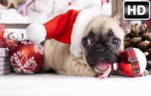 Christmas HD Wallpaper Puppies Kitten Themes