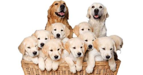 puppy mills 5