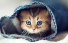 cute cats 0