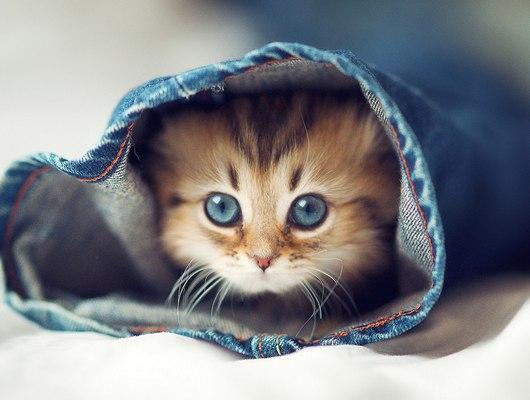 Top 10 Most Wonderful Cute Cats In The Feline World