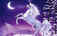 Meet the Fantastical Creature: Unicorn
