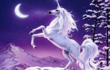 unicorn 0