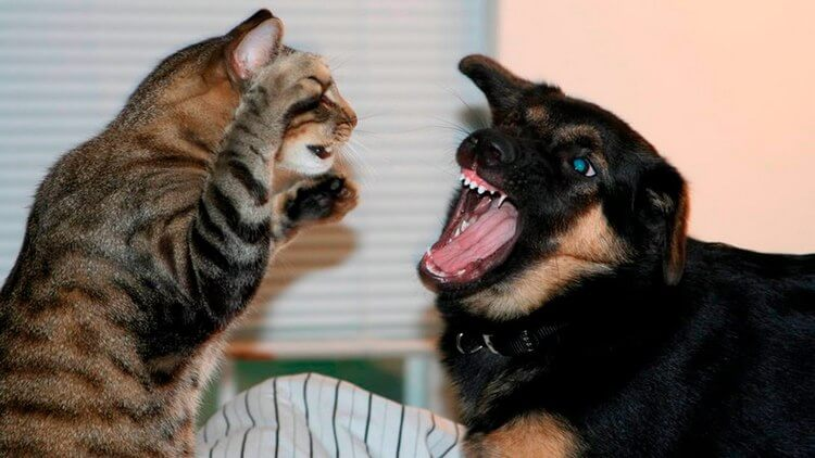 cats and dogs 1
