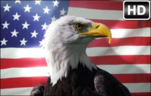 Eagles HD Wallpapers Eagle Birds New Tab