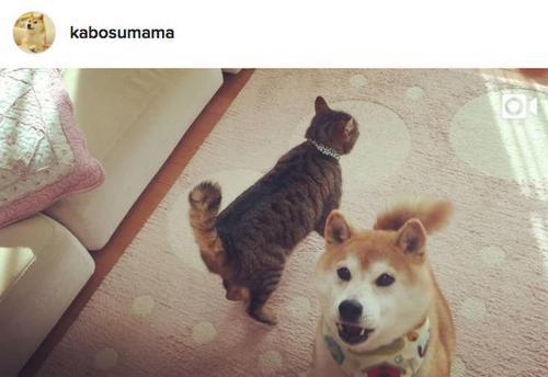 doge and nyan cat 6