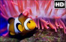 Underwater Ocean HD Wallpaper New Tab Themes