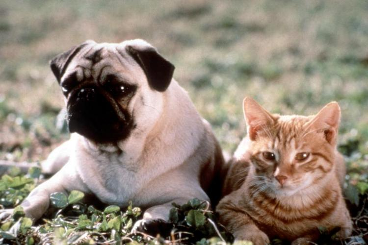 famous dogs in movies 11