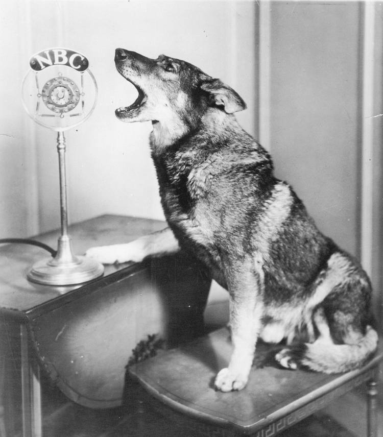 famous dogs in movies 13