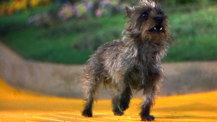famous dogs in movies 20