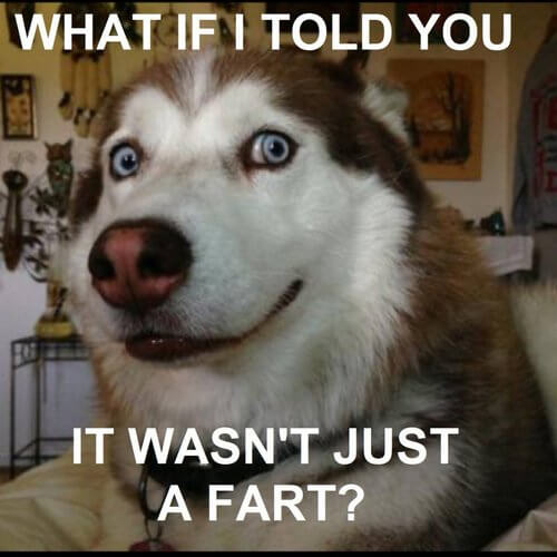 Having A Tiring Day? Here's The Top 50 Dog Memes