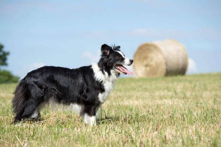 which dog breed is right for me 10