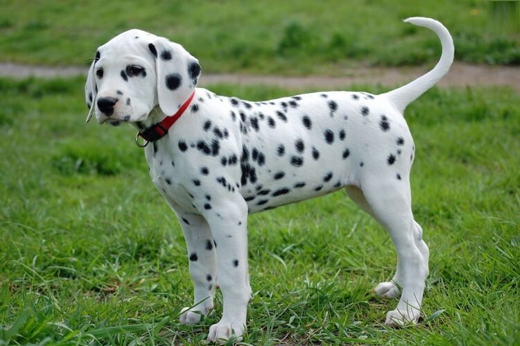 which dog breed is right for me 11