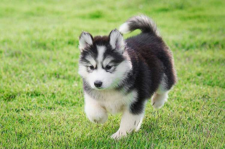 which dog breed is right for me 12