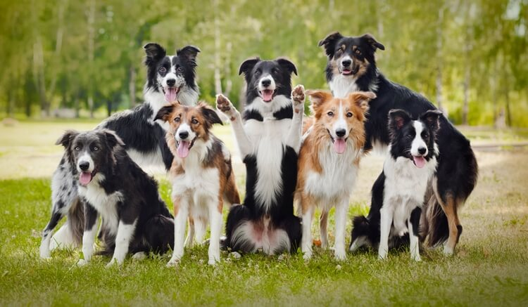 which dog breed is right for me 13