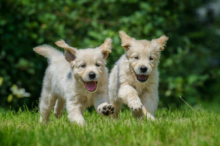 which dog breed is right for me 4