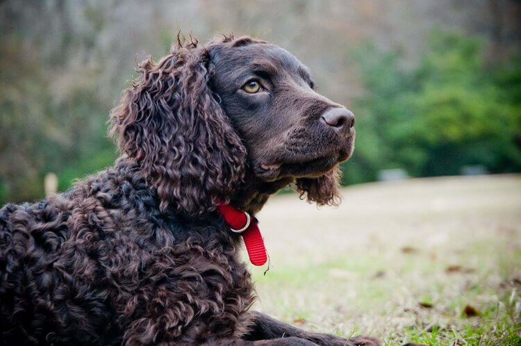 which dog breed is right for me 5