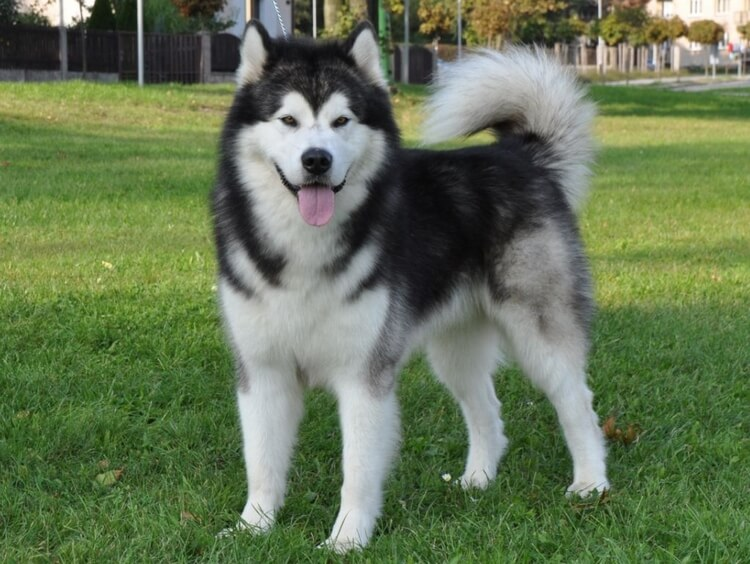 which dog breed is right for me 7
