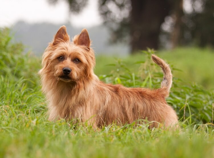 which dog breed is right for me 8