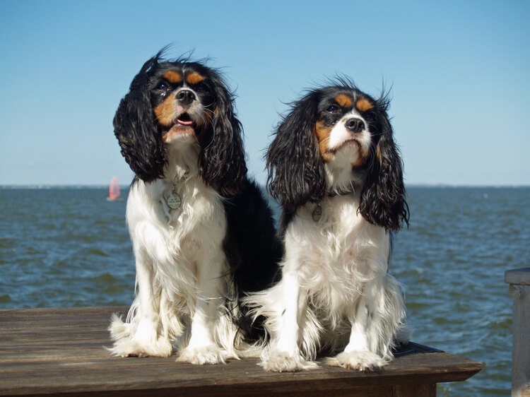 which dog breed is right for me 9