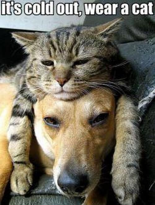dog and cat memes 1