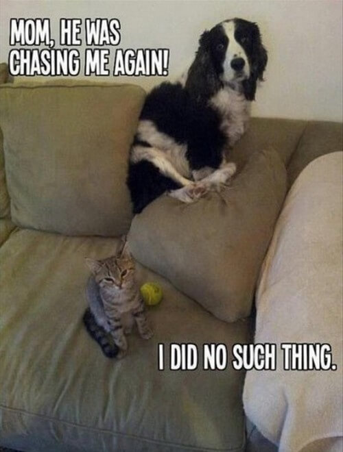 dog and cat memes 12