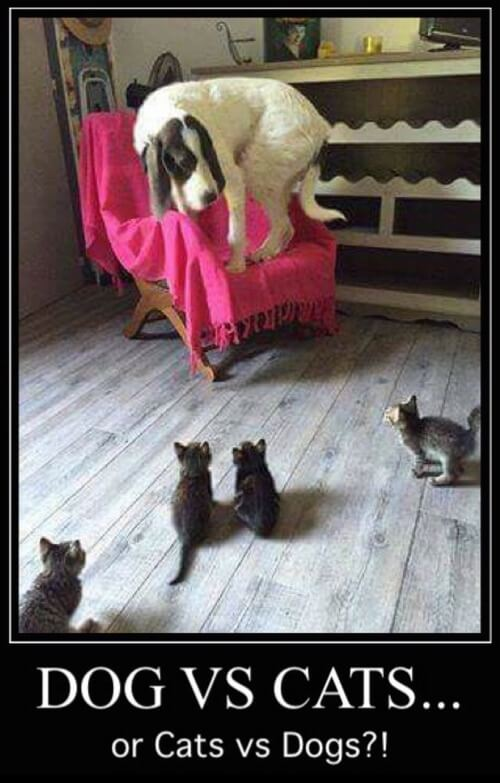 dog and cat memes 14