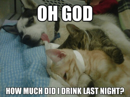 dog and cat memes 15