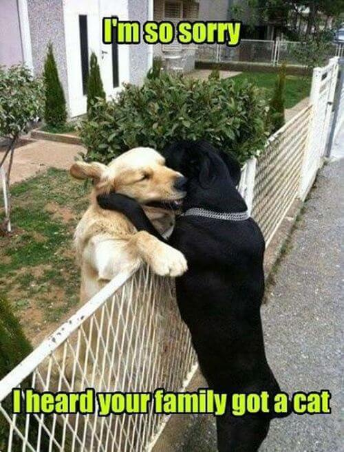 dog and cat memes 16