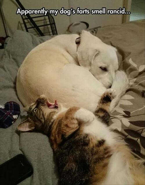 dog and cat memes 17