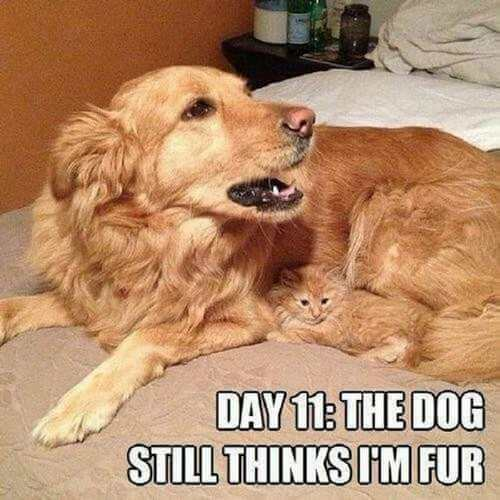 dog and cat memes 18