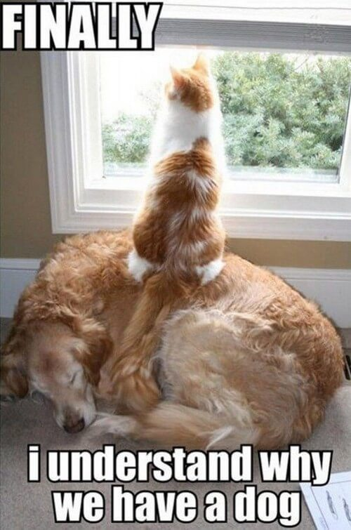 dog and cat memes 2
