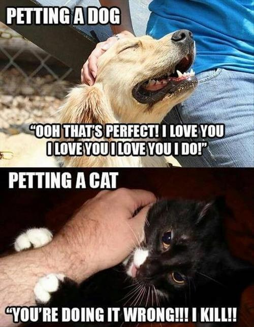Top 50 Dog and Cat Memes: Can Dog and Cat be friends?
