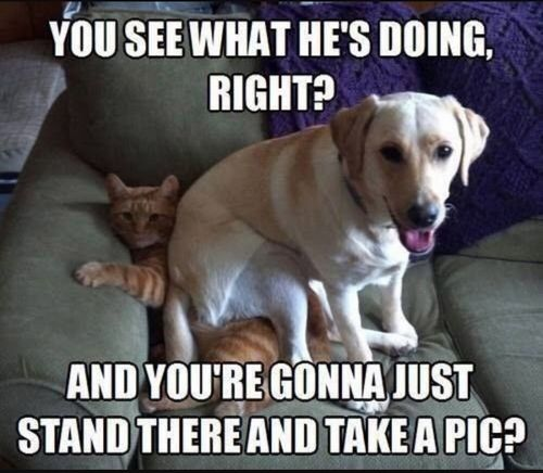 dog and cat memes 24
