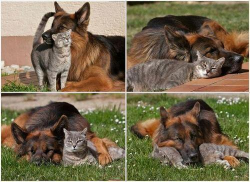 dog and cat memes 26
