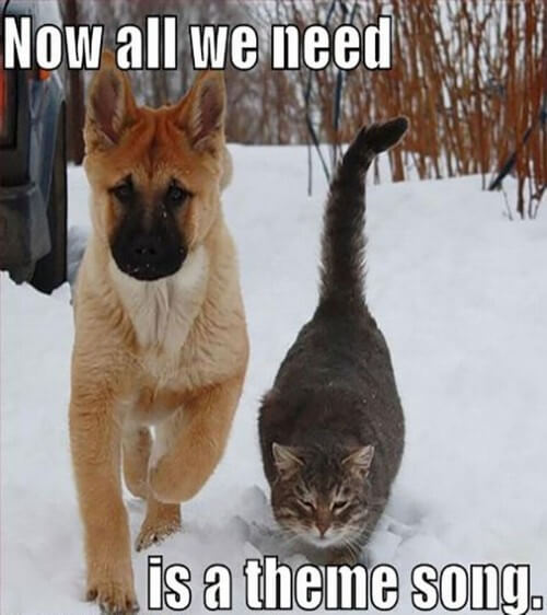 dog and cat memes 28