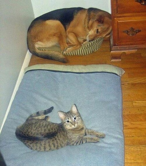 dog and cat memes 29