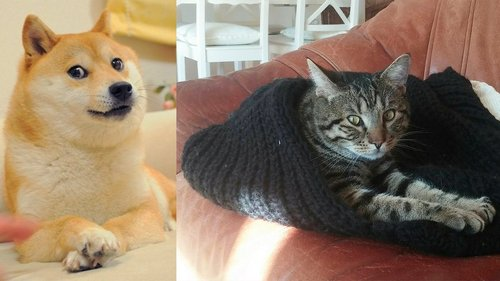 dog and cat memes 32