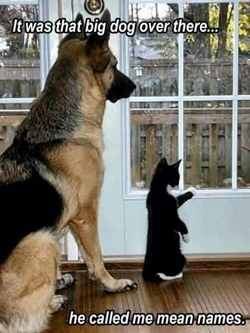 dog and cat memes 34