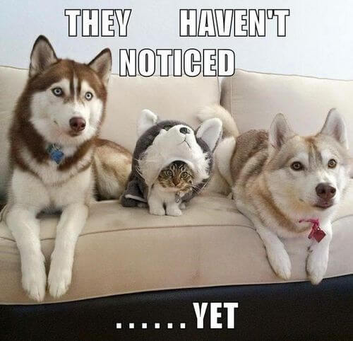 Top 50 Dog And Cat Memes Can Dog And Cat Be Friends
