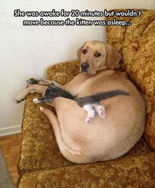 dog and cat memes 36
