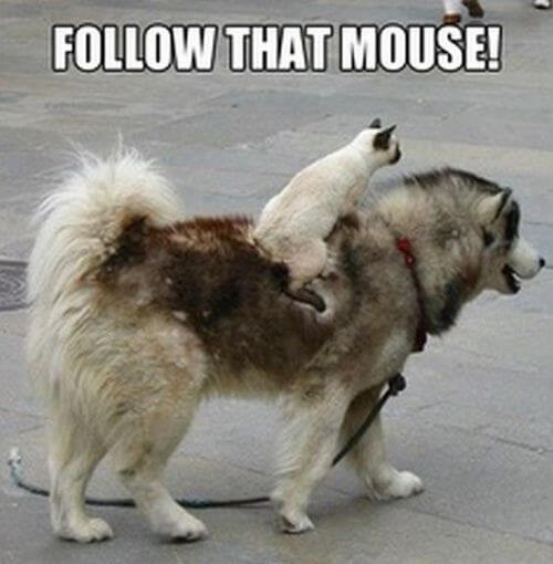 dog and cat memes 37