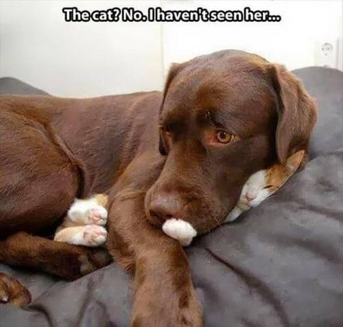 dog and cat memes 38