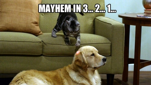 dog and cat memes 41