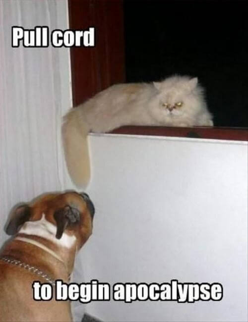 dog and cat memes 43