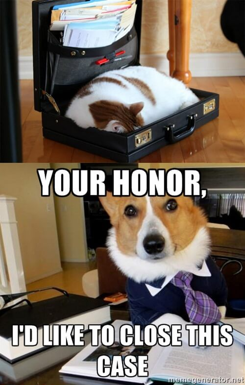 dog and cat memes 45
