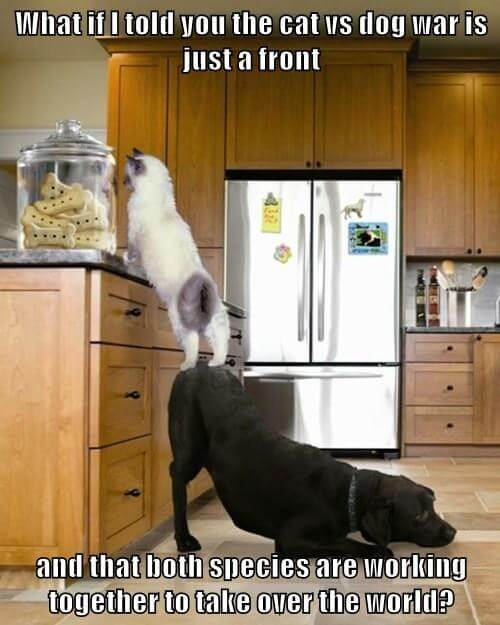 dog and cat memes 46