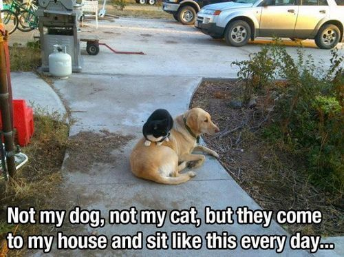 dog and cat memes 47