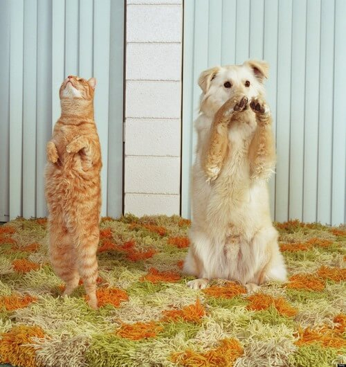 dog and cat memes 49