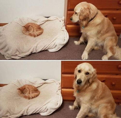 dog and cat memes 50